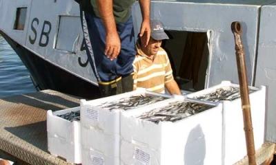 Cassette in polistirolo nel settore ittico: Regione Marche vara incentivi per sostituirle