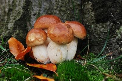 A Oriolo Romano (VT) sagra del fungo porcino: 13-22 settembre