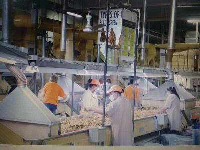 Filiera del Tabacco: eccellenza ed innovazione, garanzie per lavoratori umbri Alta valle Tevere