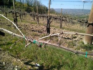 Confagricoltura: gelate tardive a meno 7, panoramica dei danni in Umbria.
