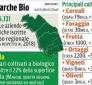 Biologico (Ass. Marche Carloni): banca dati sul vino strumento strategico, Mipaaf lo comprendera'