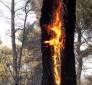 Prevenzione-lotta a incendi boschivi: convenzione Regione-MiniInterno-VV.FF